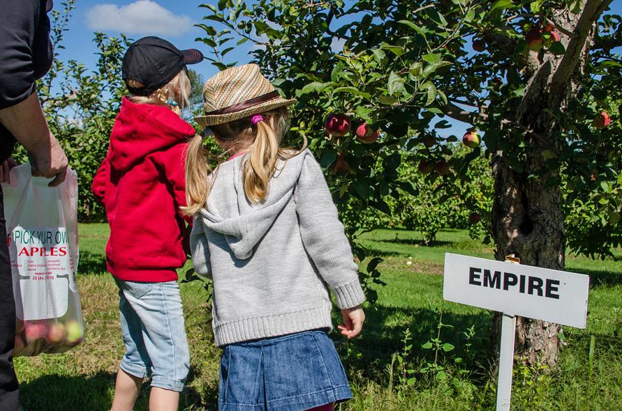 Kilmarnock Apple Orchard